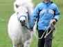 duben 2017 svod shetland pony